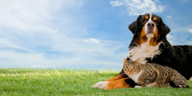 CBD-olie Bij Huisdieren