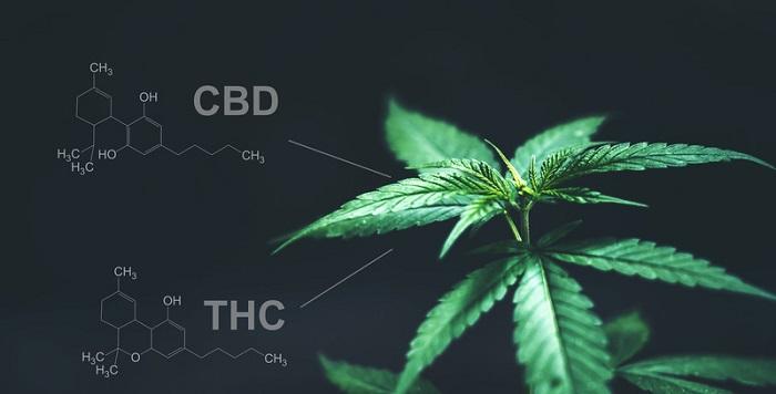 Bijwerkingen CBD olie en THC olie